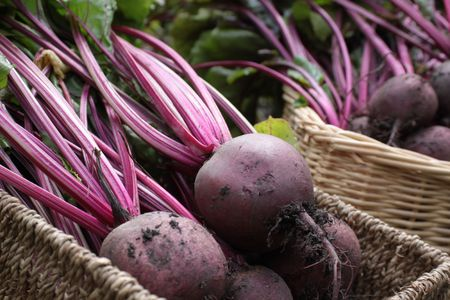 Freshly harvested organically grown beetroot. Crop with leaves set in two wicker type baskets on a veggi patch. detail to front of image.