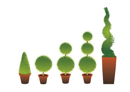 A row of different shape Topiary shrubs set in terracotta pots set on an isolated white background. Stock Photo