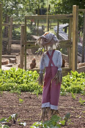 scarecrow: The rear view of a hand made full figure scarecow stuffed with straw and wearing a red pair of dungarees with a blue checkered shirt  and a hesian hat. Set amongst a green vegetable garden, with a chicken coup visible to the background.