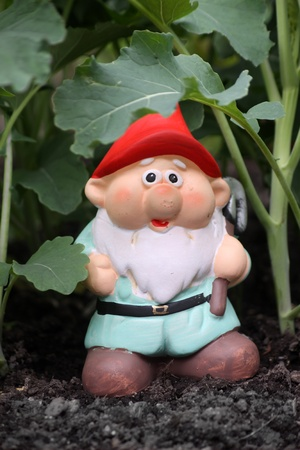 broccolli: A small colorfully decorated white bearded garden gnome with a red hat and pale blue tunic, set in a vegetable patch amongst broccolli plants. Set on a portrait format.
