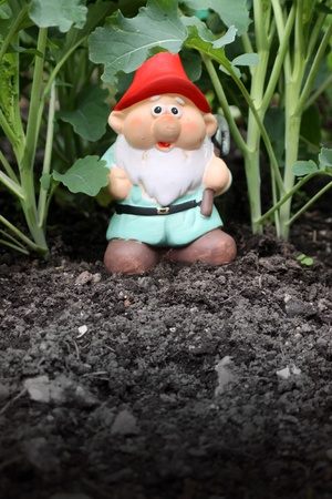A small colorfully decorated bearded garden gnome with a red hat and pale blue tunic, set in a vegetable patch of broccolli shoots. Set on a portrait format with room for copy. photo
