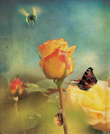 An isolated orange rose flower head and stem set over a soft focus garden background with a grunge style effect
