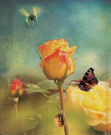 bee garden: Una cabeza de flor rosa naranja aislado y un conjunto de tallo sobre un fondo de jard�n de desenfoque con un efecto de estilo grunge  Foto de archivo