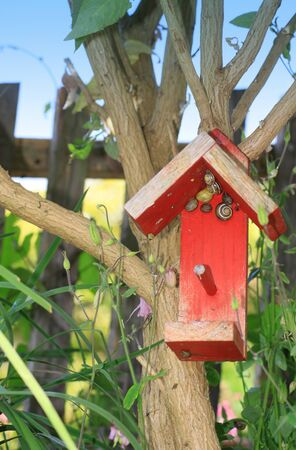 lia: A small red painted wooden constructed bird house, set amongst a bud-lia tree and garden foliage in a small city garden, Snails take refuge in the eves of the bird house Set on a portrait format
