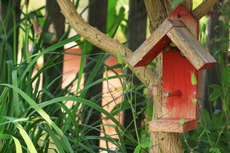 lia: A small red painted wooden constructed bird house, set amongst a bud-lia tree and garden foliage in a small city garden, Snails take refuge in the eves of the bird house  Set on a landscape format