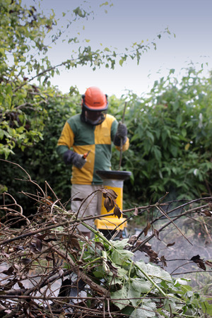 A single male figure wearing protective head gear, operating a small garden shredder  Set in soft focus to the background, with garden waste to the foreground  Stock Photo