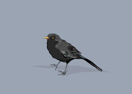 A hand drawn vector illustration of a blackbird. Stock Photo
