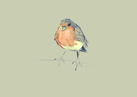 A hand drawn vector illustration of a single robin. Stock Photo