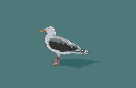 A hand drawn vector illustration of a single seagull.