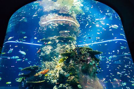 Artificial Reef tank, SEA Aquarium Stock Photo