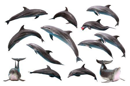 Set of Bottlenose Dolphin on white isolated background