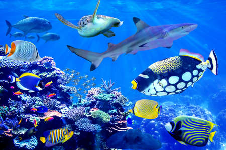 Shark and sea turtle visiting coral reef with beautiful marine fish