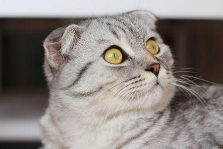 gray cat look