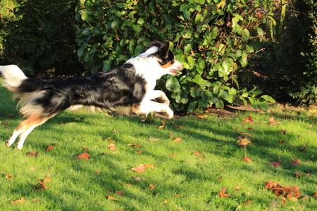 dreamlike: Dreamlike dog Stock Photo