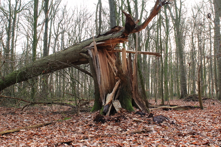 storm damage: Storm damage in forest Stock Photo