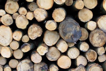 Collection of tree trunks Reklamní fotografie