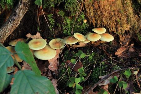 accrue: Mushrooms on tree trunk