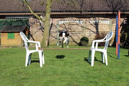 intoxicating: Training the dog Stock Photo