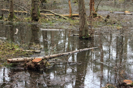biotope: the swamp