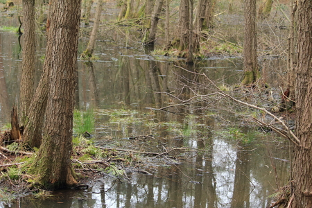 swampy: the swampy forest