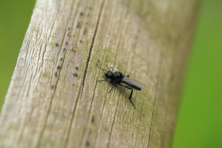 wooden beams: Fly sitting on wooden beams Stock Photo