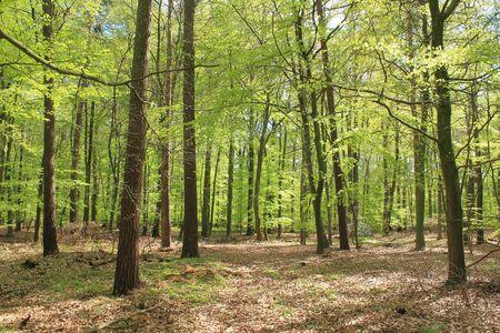 frhling: Forest in Fr�hling