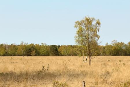 seerosen: individual birch in Venn Stock Photo
