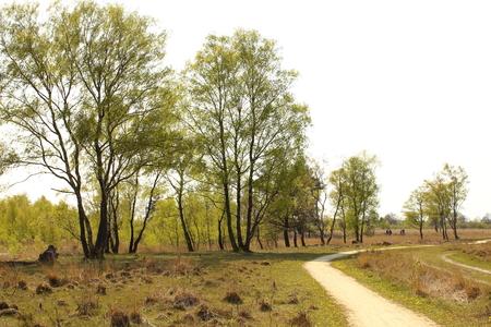 seerosen: Hiking trail leads through a Venn Stock Photo