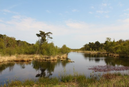 seerosen: See the middle of the bog Stock Photo