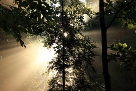 fasci di luce magica della foresta