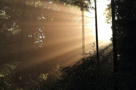 sunbeams: magical sunbeams