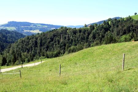 mountain meadow: Mountain meadow in the Allgaeu Stock Photo