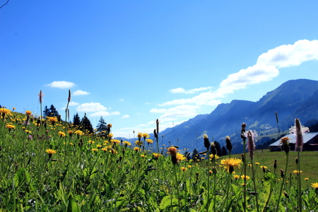 mountain meadow: Dreamlike mountain meadow with mountain peak in the background