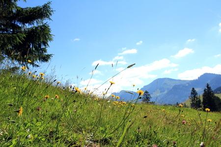 mountain meadow: the mountain meadow