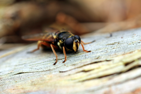 Bee seeks warmth in the fall of Log
