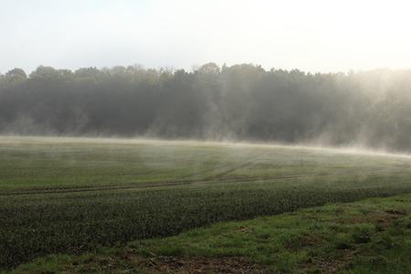 ascending: Ascending fog