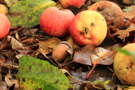 ? apples along the way