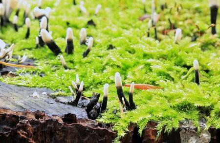 fungi: family mushroom