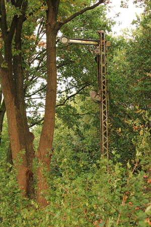 Old signboard in the forest Banco de Imagens