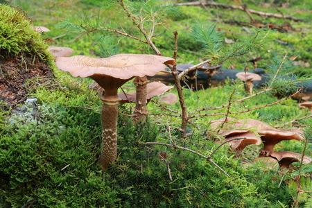 Mushroom on the forest floor