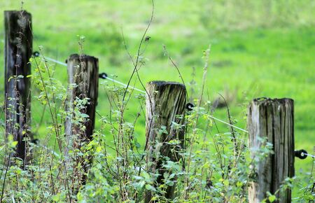 Barbed wire fence at the pasture