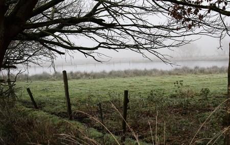 Fog in the moor