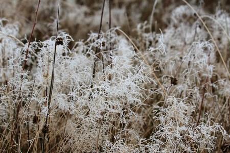 frozen worlds Фото со стока