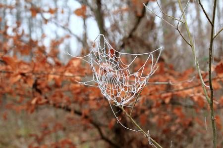 クモの巣の霜 写真素材