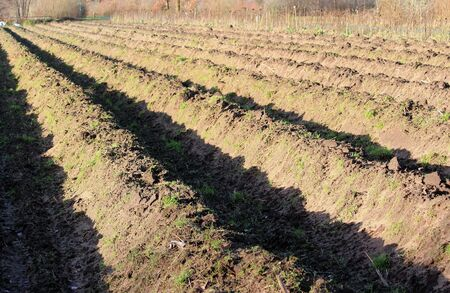 Furrows in the field