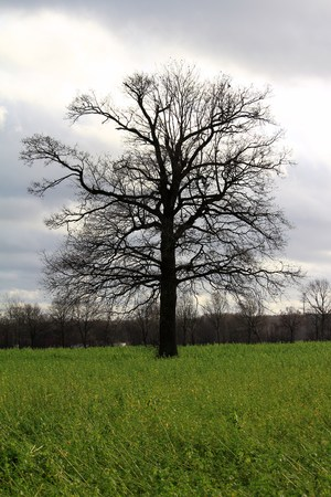 single tree in the countryside