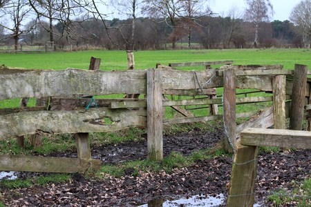 Gate at the meadow edge