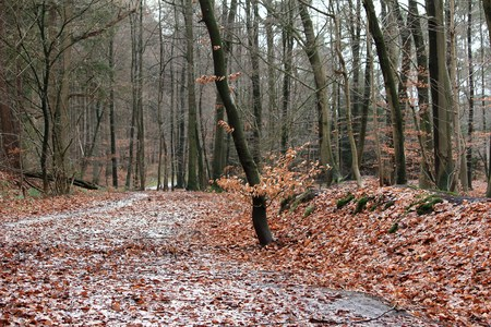 Path through the forest after the rain