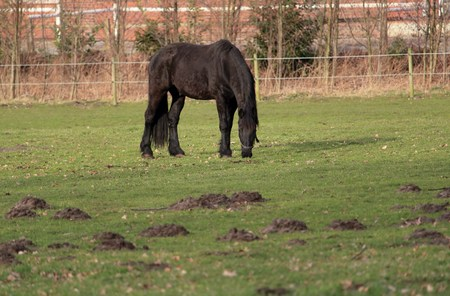 Horse is grazing on the paddock