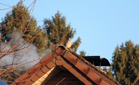 Pigeon on the roof in front of smoking chimney